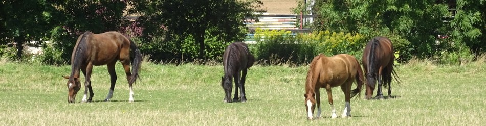 banner chevaux